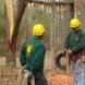 Photo by 404-CUT-TREE. Tree removal - thumbnail