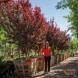 Photo by Moon Valley Nurseries.  - thumbnail