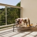 Photo by Talmadge Construction, Inc. Deck with Wire Railing on Pedestal Deck Tile System - thumbnail