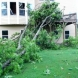 Photo by Full Circle Restoration & Construction. Tree Damage - thumbnail