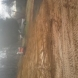 Photo by Golden Rule Builders. Construct a 40' X 54' Pole Barn with Loft - thumbnail