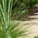 Photo by Habify. Pinecrest Landscaping and Patio - thumbnail